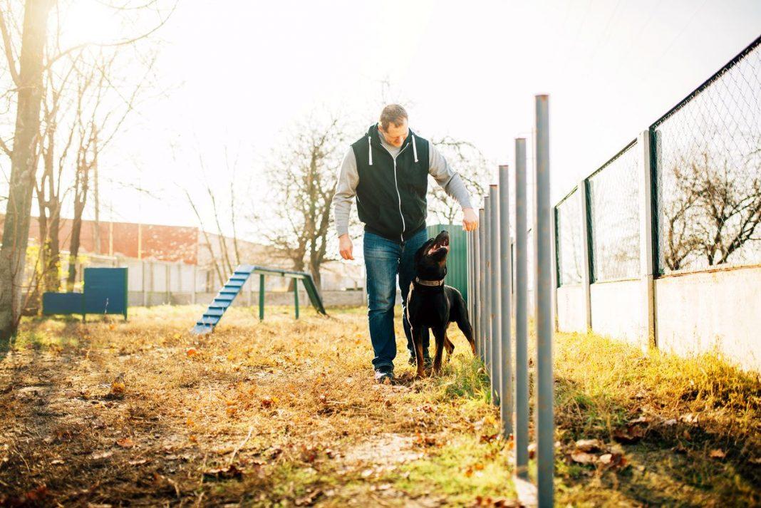 éducateur canin à Bordeaux : Rémi Guérin